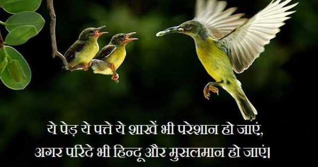 Two Line Shayari, Yeh Ped Yeh Patte